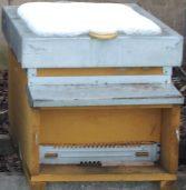 Gennaio calendario apicoltore 2015