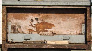 Foto di arnia marrone a gennaio con poche api in vista
