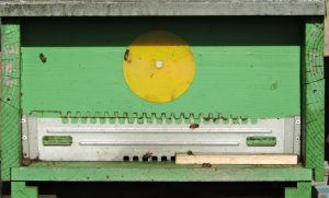 Foto di arnia verde a gennaio con poche api in vista