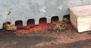 api-su-soglia-gennaio-2015