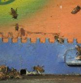 Gennaio visita controllo apiario