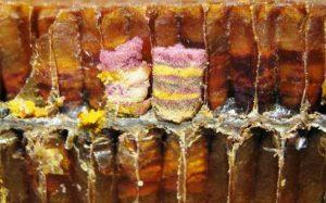 polline grezzo nelle cellette